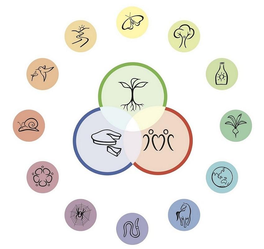overzicht van de 12 ontwerpprincipes van Permacultuur