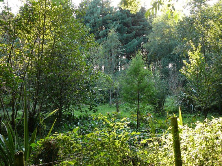 voedselbos biodiversiteit