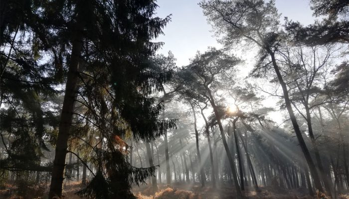 winter-zon